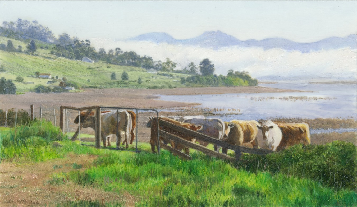 Still waiting: Cows by te Huon River